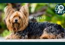 כלבי טרייר