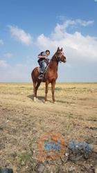 מכירה סוסים, 5 גיל, נקבה מין, ₪7000